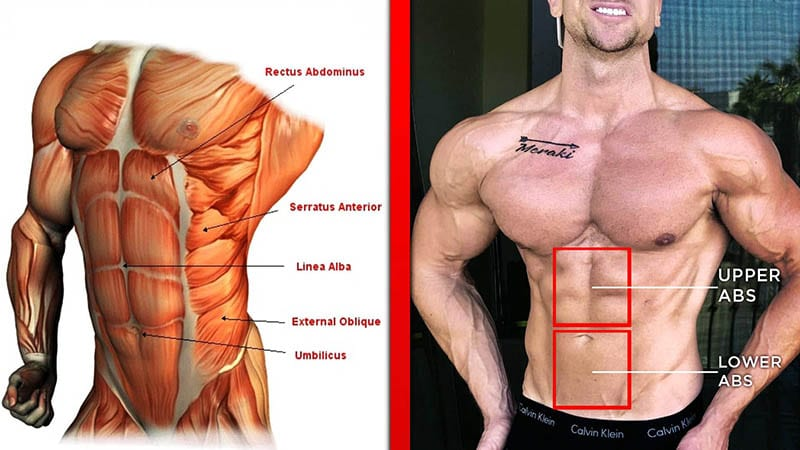 Before & After Abs Exercises
